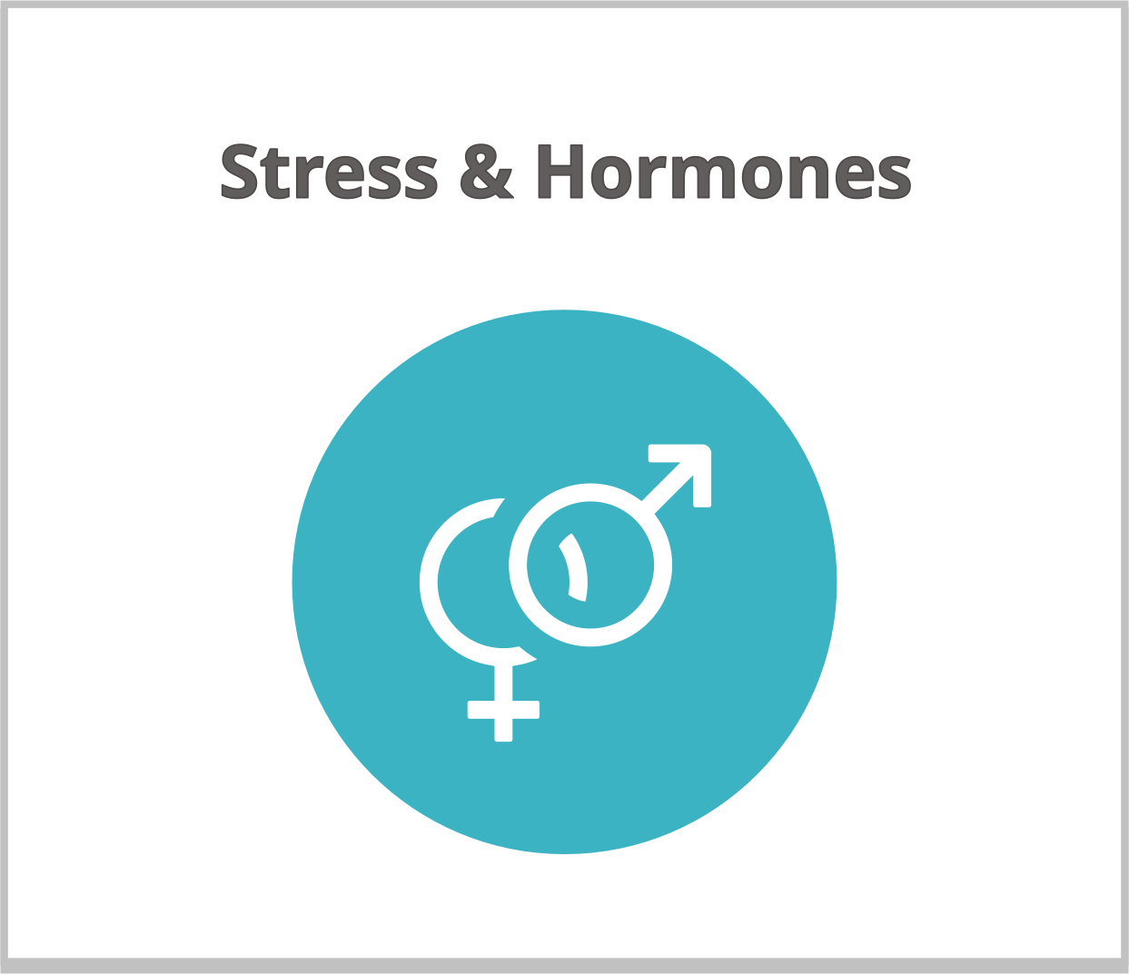 4 stress hormones icon