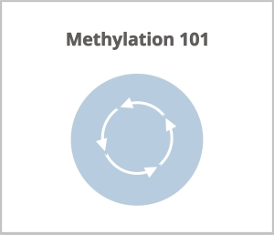 8 methylationsm
